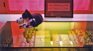 <p>Mijn bijdrage: een etalage met alle variëteiten pasta in de kleuren van de Italiaanse vlag, bewaakt door onze kat Kidji</p>